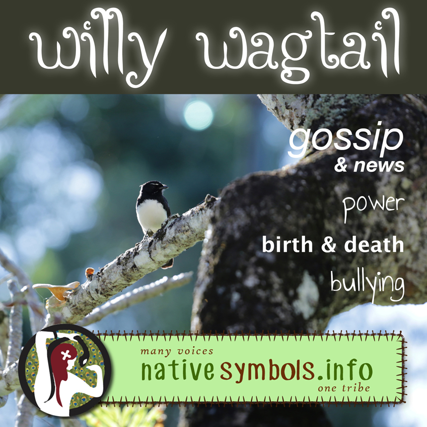 Willy Wagtail as a symbol in your life - meanings.