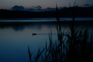 Twilight at Narrabeen Lakes, Sydney, Australia