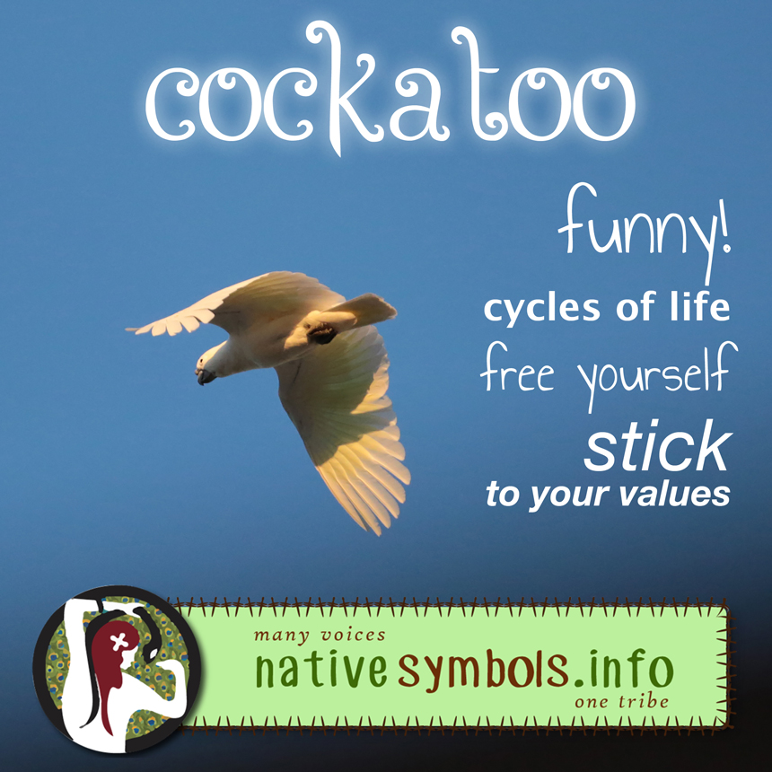 shareable cockatoo pic with meanings as a symbol