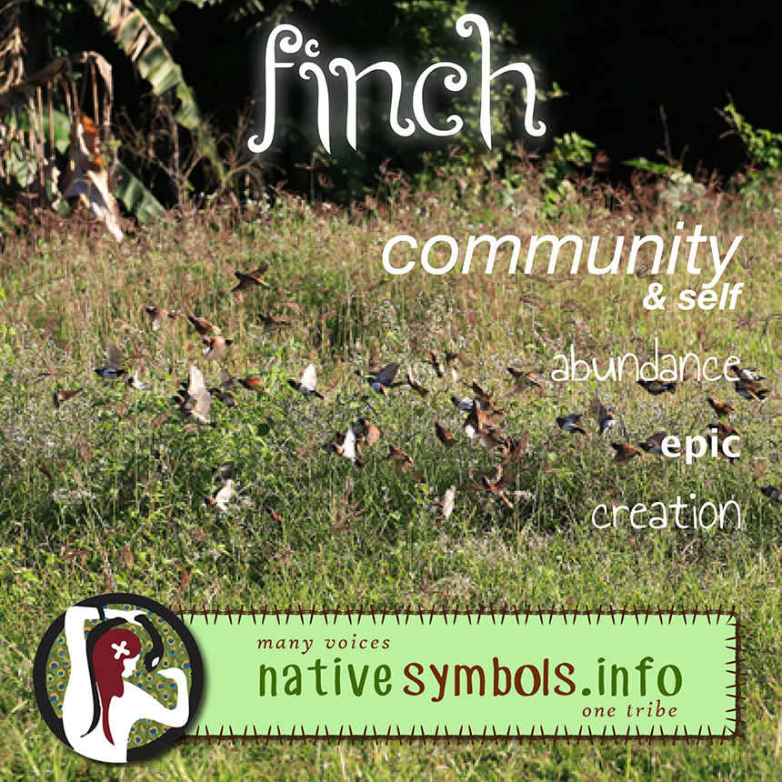 shareable infographic/image of finches meaning as a symbol appearing in your life