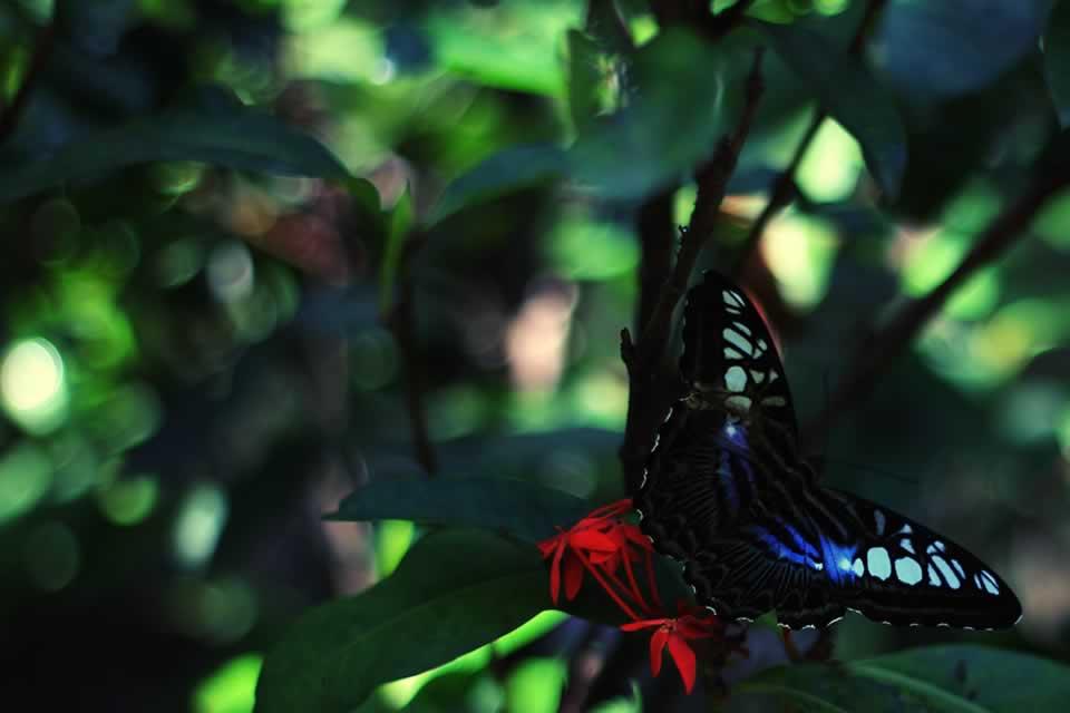 butterfly at perdana botanical gardens, Malaysia