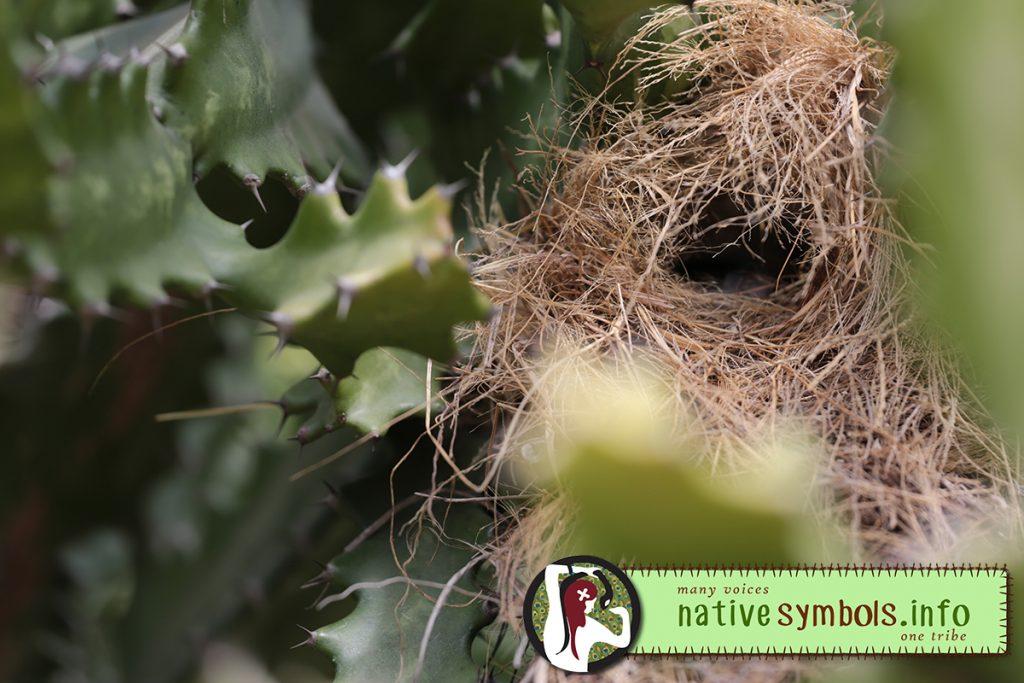 finch nest