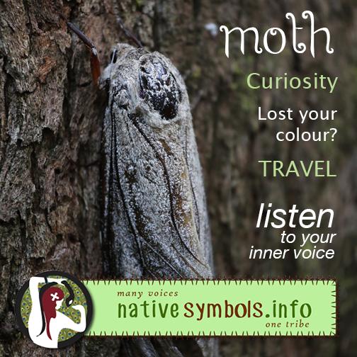 social media sharing image Moth