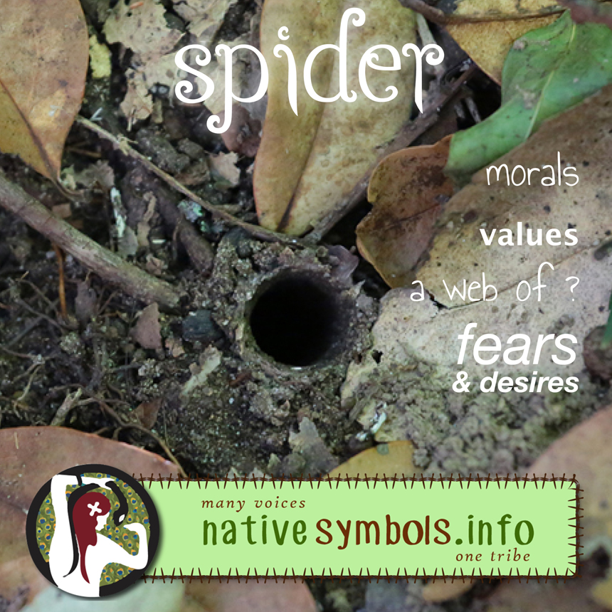 shareable spider pic with meanings as a symbol