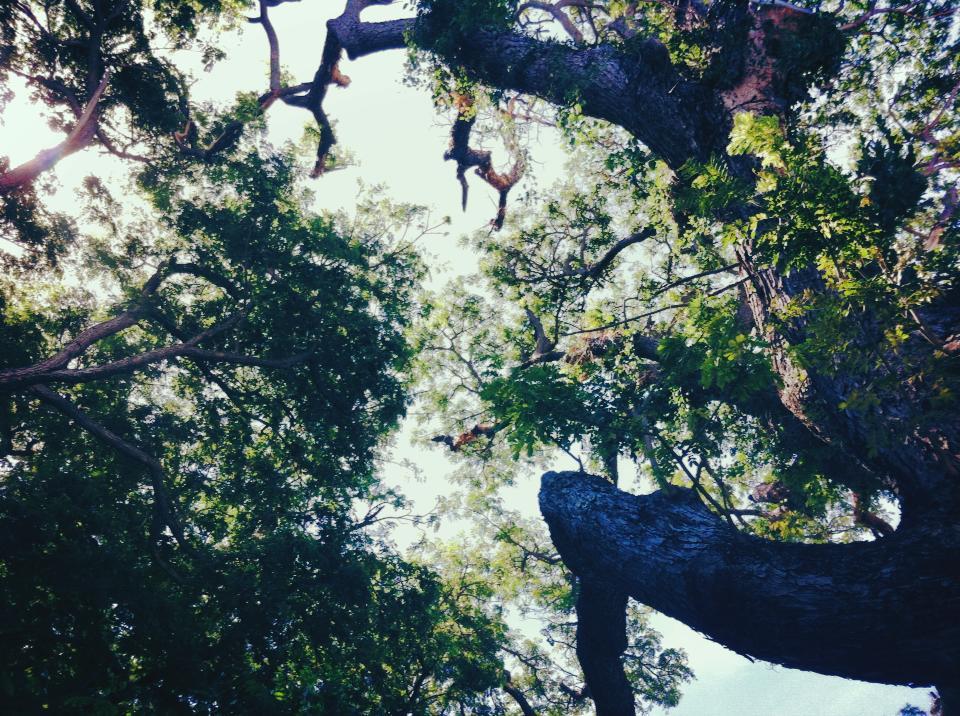 we love trees!