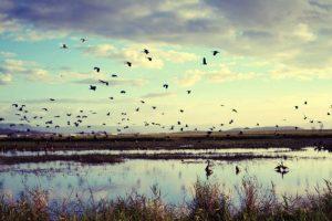 Townsville wetlands on dusk